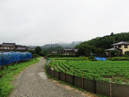 Kyu_b_84