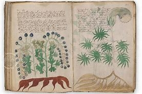 Voynich-manuscript_1